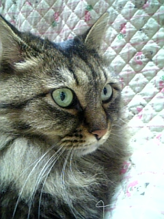 実家猫ちぃこ